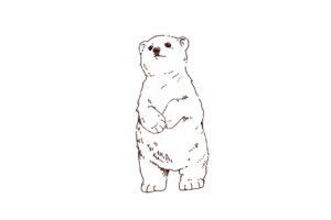 見上げるシロクマ,フリーイラスト,フリー素材,線画イラスト