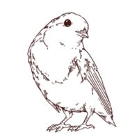 小鳥の線画イラスト