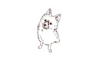 犬の上目遣い,フリーイラスト,線画イラスト,フリー素材