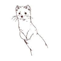 オコジョの線画イラスト