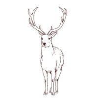 牡鹿の線画イラスト