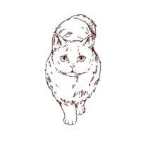 猫の正面イラスト
