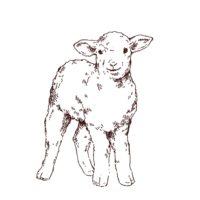 子羊の線画イラスト