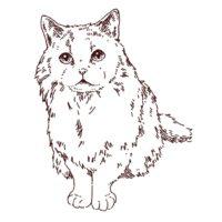 猫の正面線画イラスト