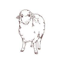 羊の正面イラスト,フリーイラスト,フリー素材,線画イラスト