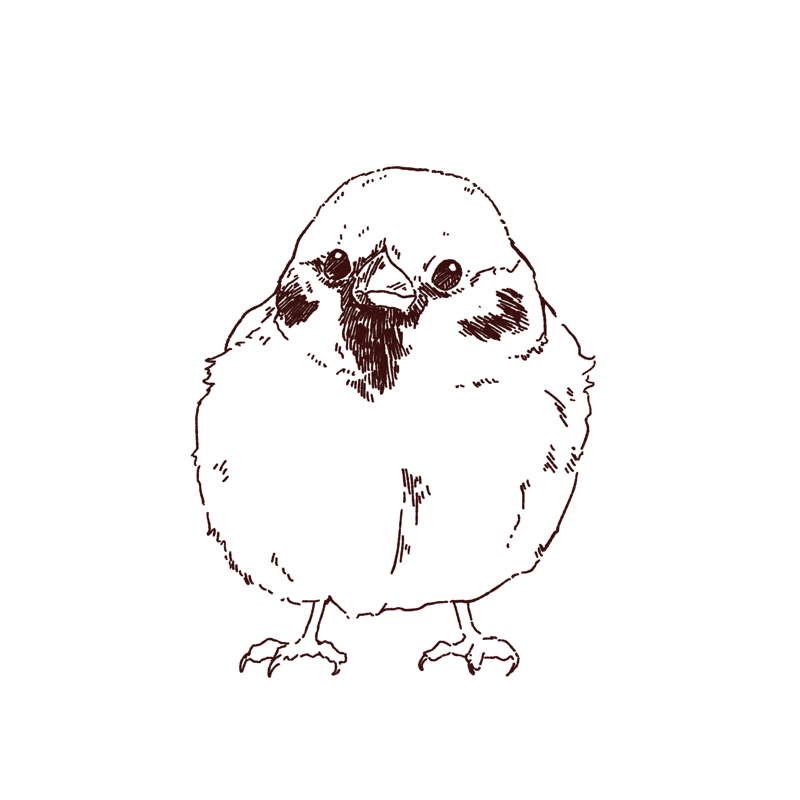 すこし膨らんだ雀の線画イラスト