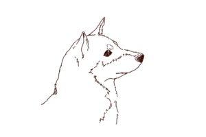 柴犬の横顔イラスト,フリーイラスト,フリー素材