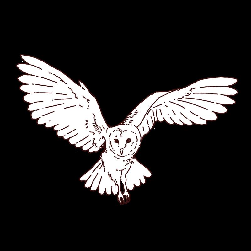 梟の飛んでいるイラスト,フリーイラスト,フリー素材,線画イラスト
