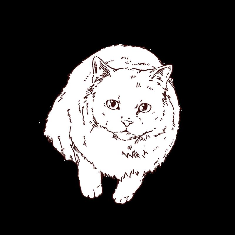 猫のイラスト,フリーイラスト,線画イラスト,フリー素材