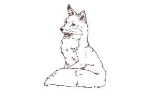 狐の全身イラスト,フリーイラスト,フリー素材