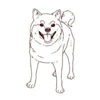 柴犬の正面全身イラスト