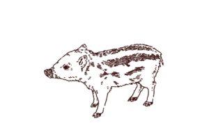 横向きの猪(ウリ坊)のイラスト,フリーイラスト,フリー素材,線画イラスト