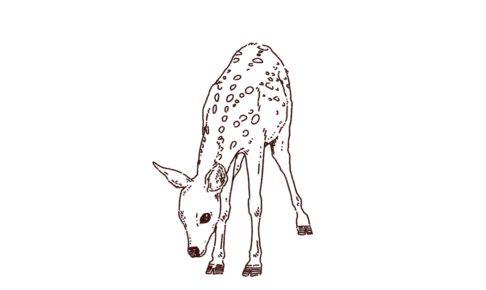バンビ(子鹿)のイラスト,フリーイラスト,フリー素材,線画イラスト