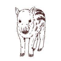 猪(ウリ坊)のイラスト,フリーイラスト,フリー素材,線画イラスト