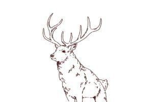 雄鹿のイラスト,フリーイラスト,フリー素材,線画イラスト