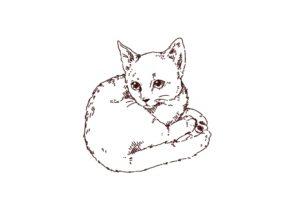 子猫が丸くなっているイラスト,フリーイラスト,フリー素材,線画イラスト