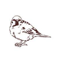 雀の線画イラスト,フリーイラスト,フリー素材,線画イラスト
