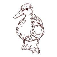 鴨(カモ)のイラスト,フリーイラスト,フリー素材,線画イラスト