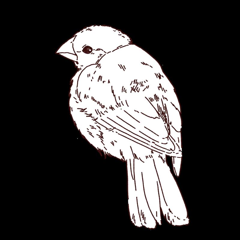 文鳥の雛のイラスト,小鳥,フリーイラスト,フリー素材,線画イラスト