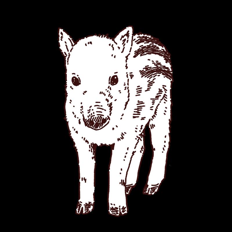 猪(ウリ坊)のイラスト,フリーイラスト,フリー素材,線画イラスト,年賀状