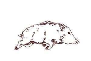 走っている猪のイラスト,フリーイラスト,フリー素材,線画イラスト,年賀状,イノシシ