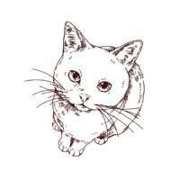 上目使いの猫イラスト,フリーイラスト,フリー素材,線画イラスト,アメショ