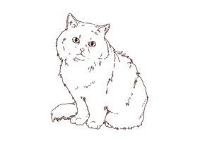 猫(ラグドール)のイラスト,フリーイラスト,フリー素材,線画イラスト,長毛種猫