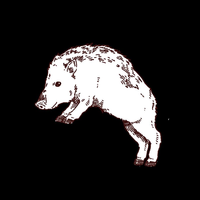 猪のイラスト,フリーイラスト,フリー素材,線画イラスト,年賀状イラスト,動物,あけましておめでとう