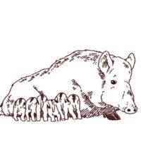 イノシシの親子のイラスト,フリーイラスト,フリー素材,線画イラスト