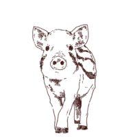 ウリ坊正面イラスト,フリーイラスト,フリー素材,線画イラスト,こどもイノシシ,猪,年賀状