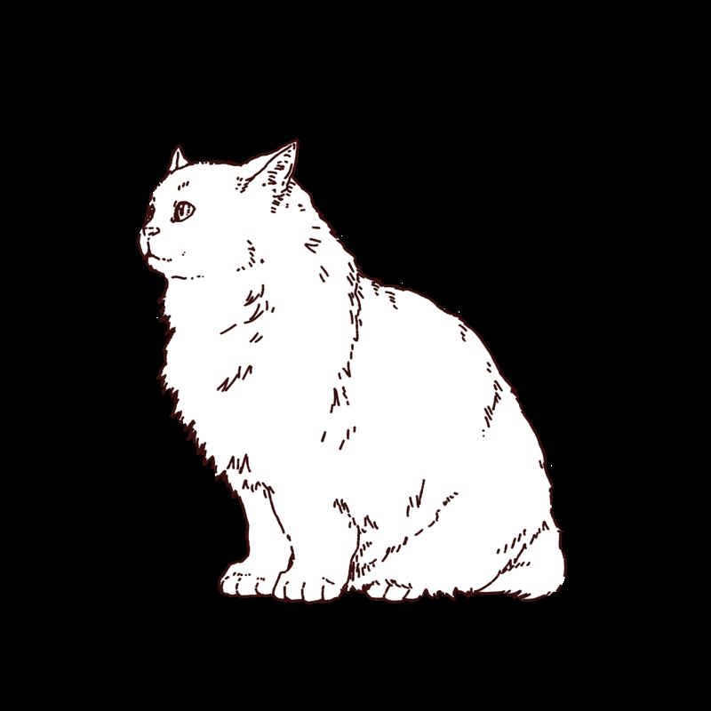 横向きの猫(ラグドール)のイラスト,フリーイラスト,フリー素材,線画イラスト,ラグドール,ねこイラスト