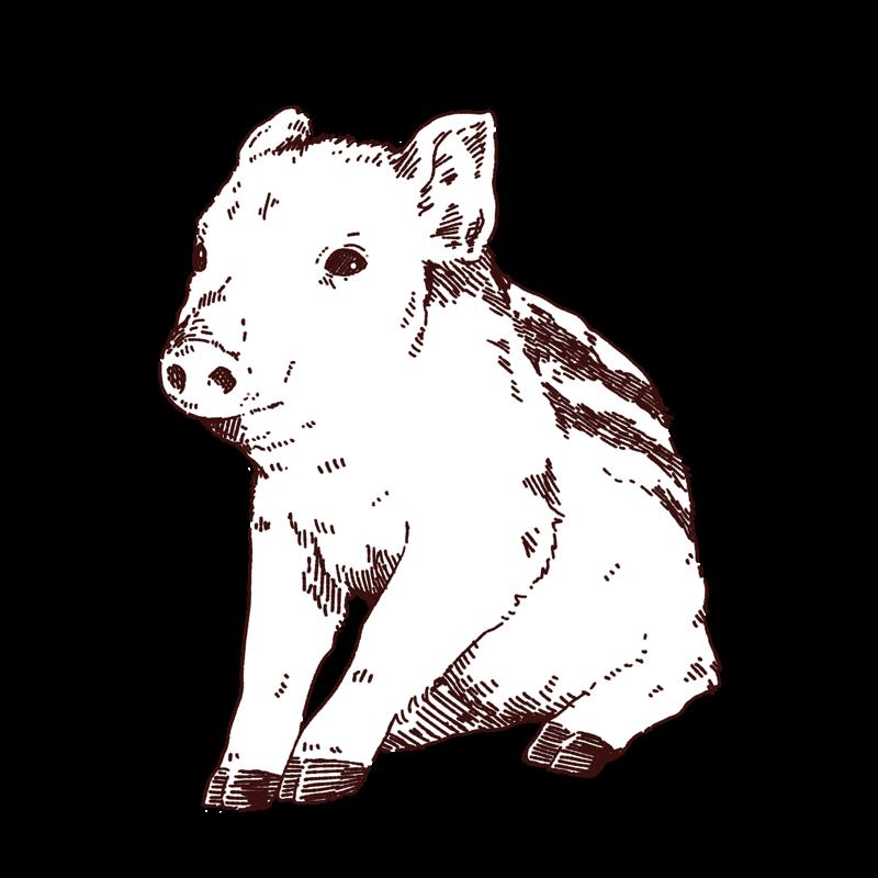 おすわりしているウリ坊のイラスト,フリーイラスト,フリー素材,線画イラスト,猪の子供,年賀状イラスト,あけましておめでとう