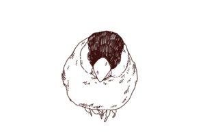 桜文鳥のイラスト,フリーイラスト,フリー素材,線画イラスト,小鳥,javasparrow,文鳥