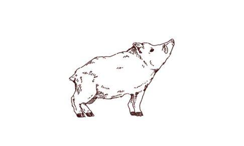 横向きイノシシのイラスト,フリーイラスト,フリー素材,線画イラスト,年賀状,猪